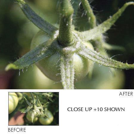 Hoya Diopter Element Mutli Coated Close Up Lens 64 - 504
