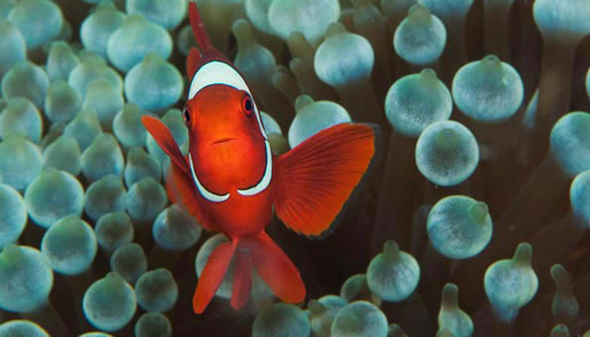 The Top 10 Fundamentals of Underwater Photography   Expert ...