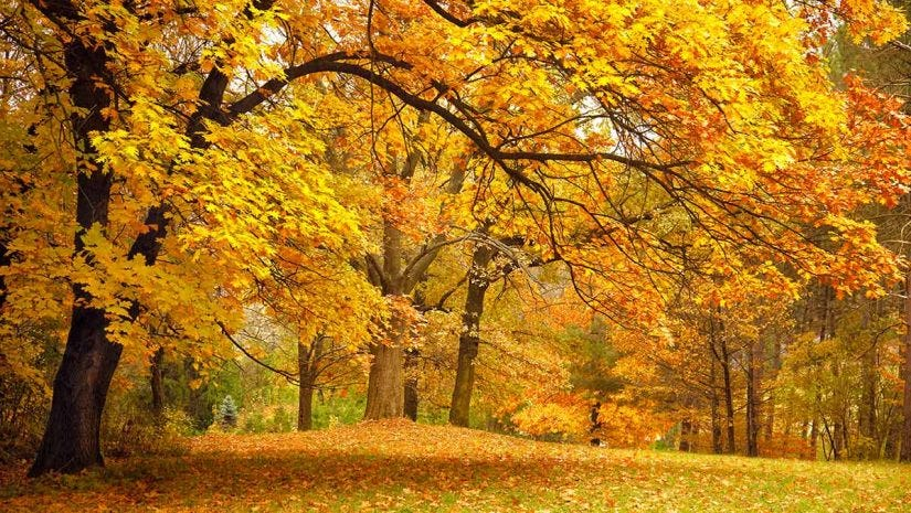 autumn leaves 5 photography tips expert photography blogs tip