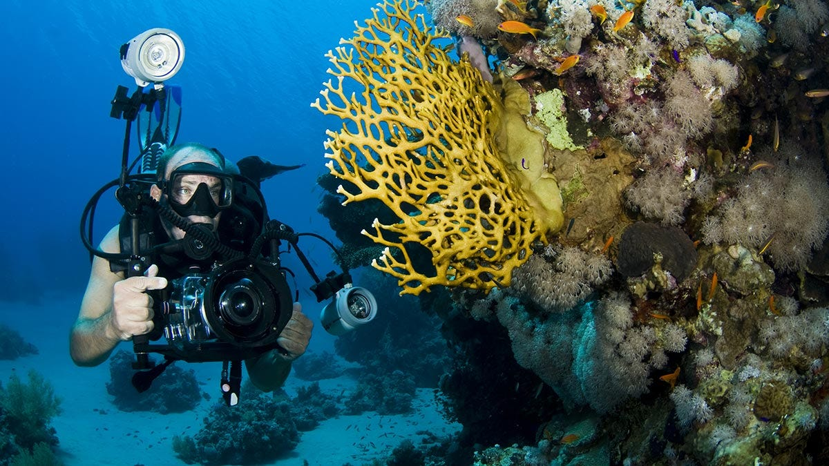 Underwater Photographer Camera Coral Reef