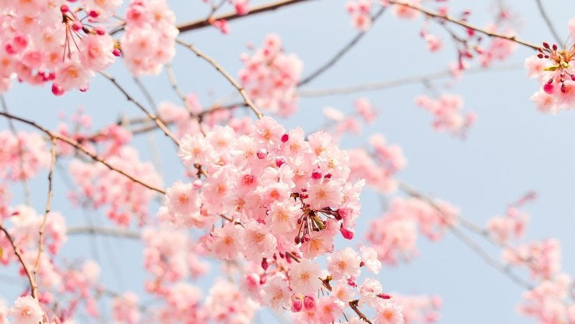 The Best Spring Photos On Instagram Adorama Learning Center