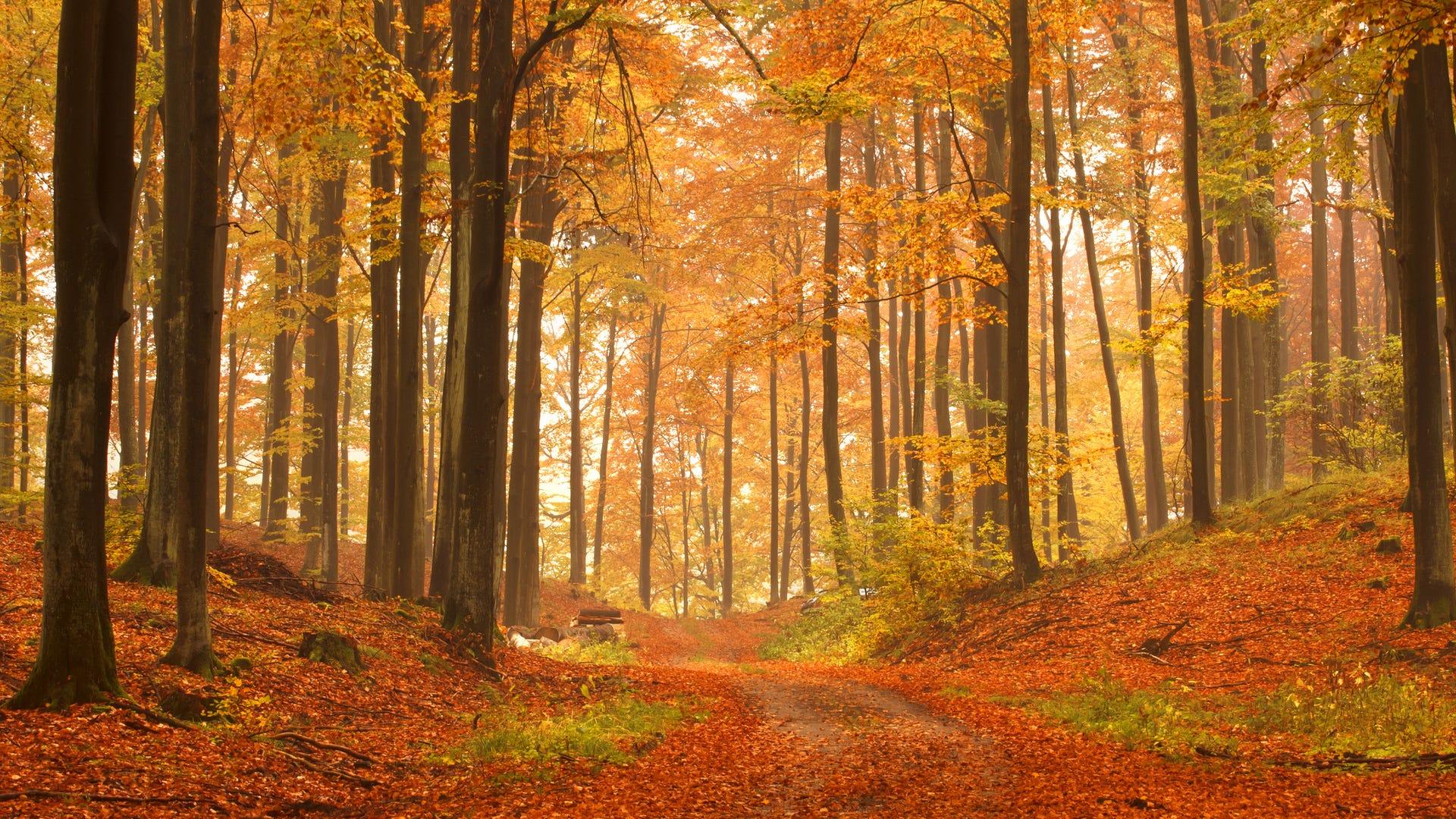 Fall Foliage Photography Tips advise