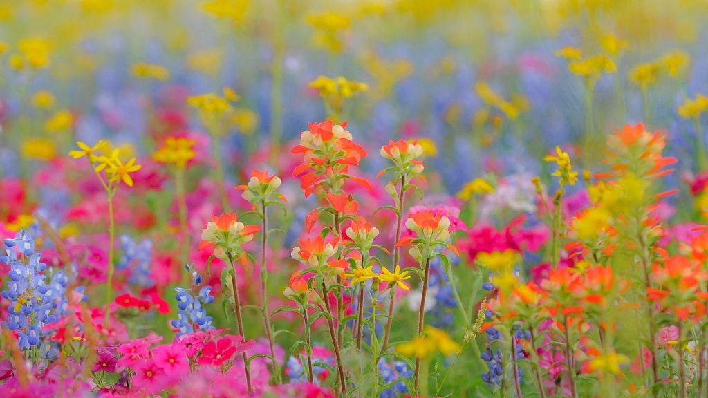 Wild About Wildflowers