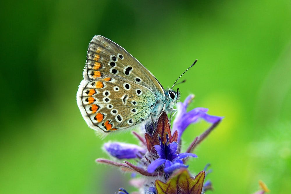 Colorful macro shot of butterfly on flower