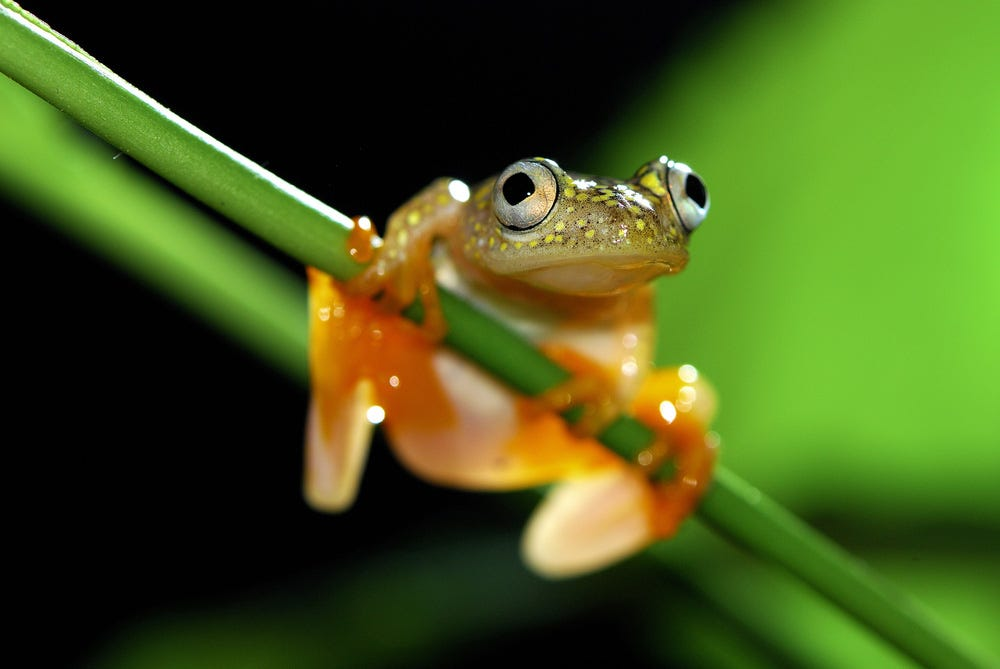 Close up shot of small frog on plant