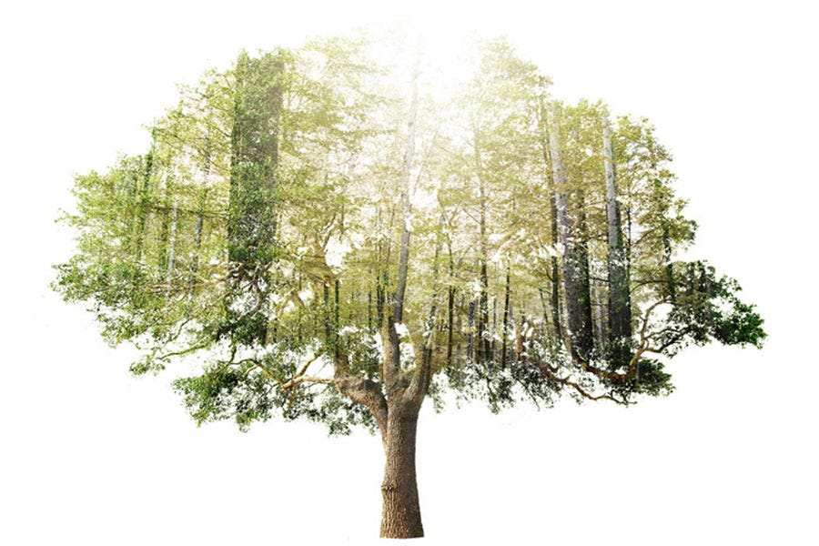 Double exposure shot of big tree and forest