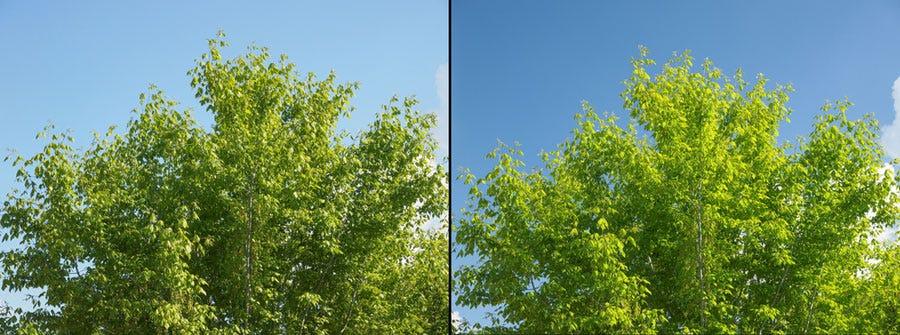Efecto del filtro polarizador en la foto del árbol verde y el cielo azul.