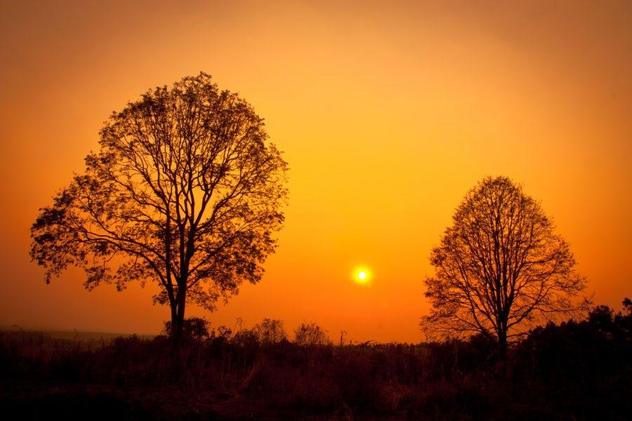 Sunset shot of asymmetrical trees