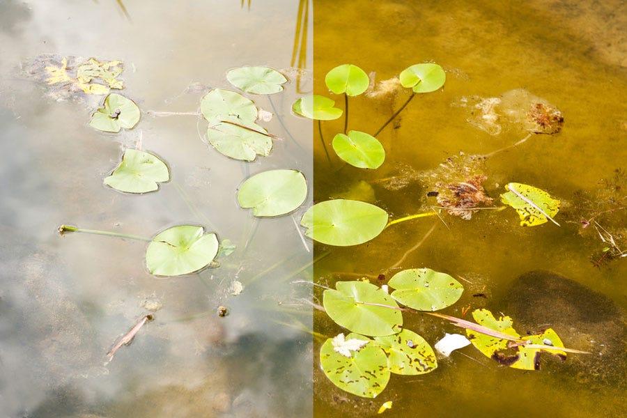 Efecto del filtro polarizador de lente de cámara sobre la imagen del estanque de agua