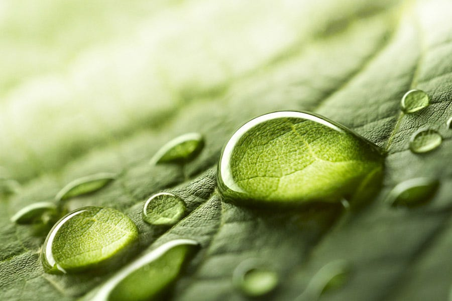 macro shot of water droplets on leaf