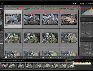 Getting Started in Adobe Photoshop Lightroom 3, Part 2 | Expert