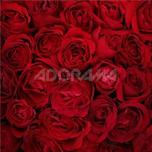 Westcott 6 x 8ft Bed of Roses, Muslin Background, 929: Picture 1 regular